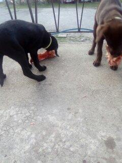 Mon premier article, présentation/Mes chiens et Moi.