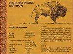 le musee du web :: Bison