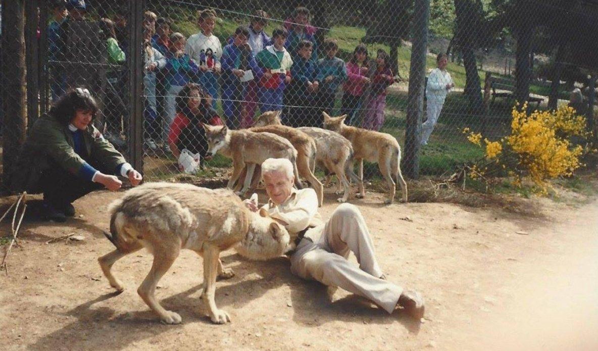 Il y a 25 ans, les loups au Gévaudan