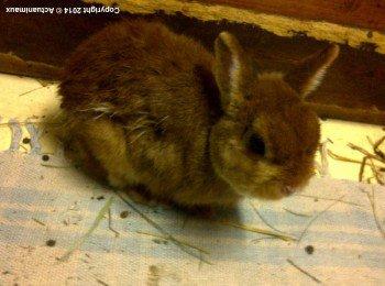 ACTU Animaux - Les lapins Rosa, Pims, Bianca, Bianco, Jasmin, Aladin sortis d'un mouroir