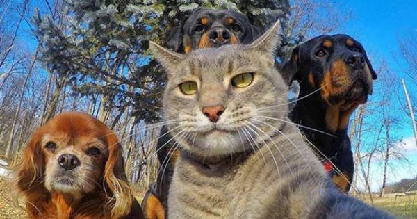 48 animaux plus doués que nous pour se prendre en selfie - Koalol