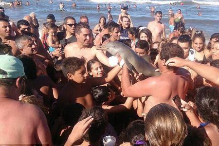 Les photos de la honte: un dauphin mort fait le bonheur des baigneurs