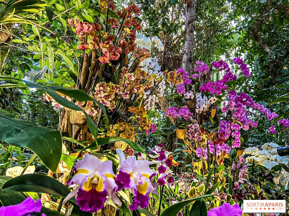 Mille et Unes Orchidées
