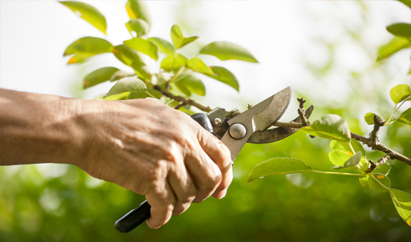 Why it is Important to Hire a Qualified Arborist?