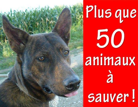 ACTU Animaux - Poitiers : plus que 50 animaux à sauver !
