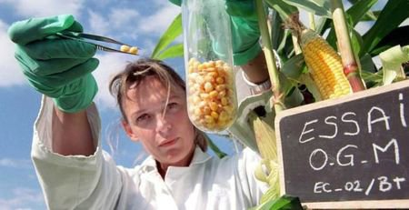 L'étude russe qui prouve que les OGM stériliseront l'humanité au bout de 3 Générations - Notre Terre