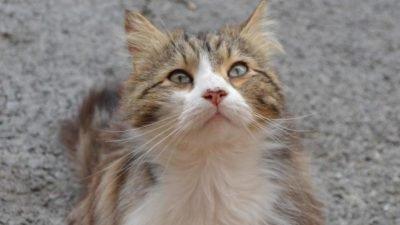 Chevelu, le chat qui a fédéré des milliers de personnes contre les tortures d'animaux