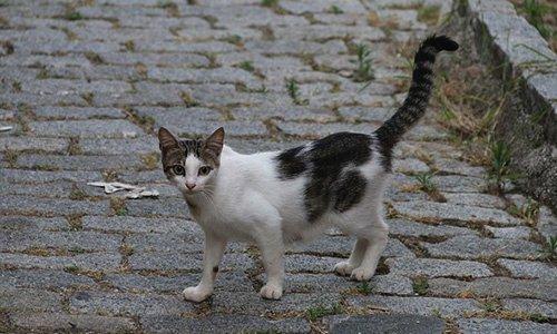 Pétition : Pour que Micheline puisse continuer de nourrir 3 chats de rue comme elle l'a toujours fait depuis 3 ans !
