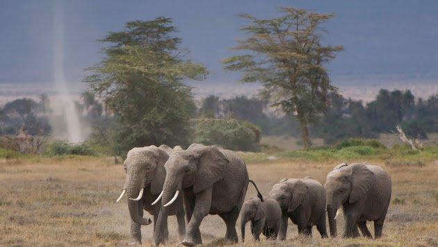 Un clic sur les éléphants pour rejoindre la communauté Save Peace sur Google+