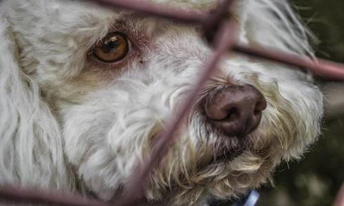 Pétition : Lutte contre l'abandon des animaux