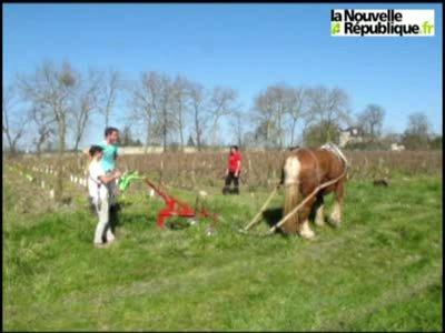 VIDEO. Des chevaux dans la vigne municipale de Tours