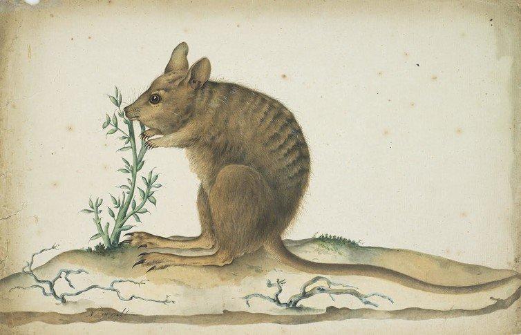 L'art au service de la science : retoursurl'incroyable expédition Baudin (1800-1804)