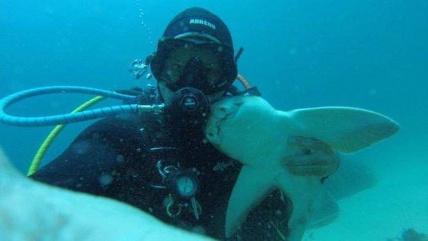 Un plongeur australien ami avec un requin