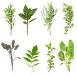 SANTE : Les plantes médicinales