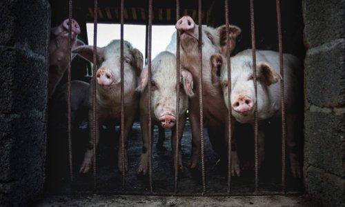 Pétition : Pour que les associations de protection animale organisent une manifestation unitaire