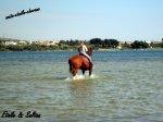 le blog de maiia-etoiile-chevaux
