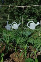 Besoins en eau des principaux légumes