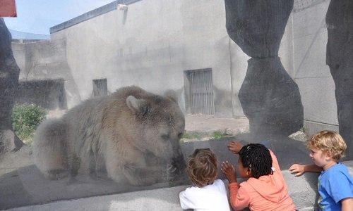 Pétition : Le transfert de certains animaux vers des refuges (les rennes) et l'agrandissement de certains enclos ainsi que la mise en place de stilumus