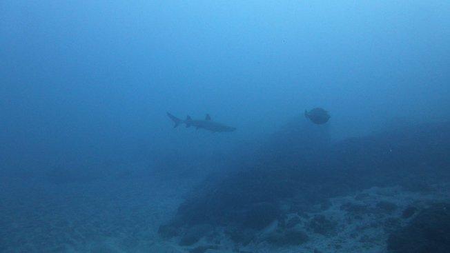 Risque requin : conseils de sécurité et de prudence