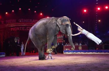 Pétition : L'interdiction des cirques détenant des animaux sauvages sur le territoire municipal