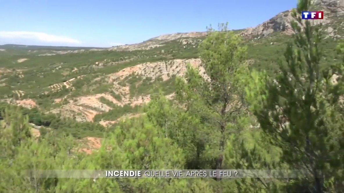 30 ans après un grave incendie, la montagne Sainte-Victoire a repris vie