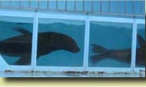 Pétition : Non à l'exploitation animale et la venue de Aquatic Shark à NEVERS