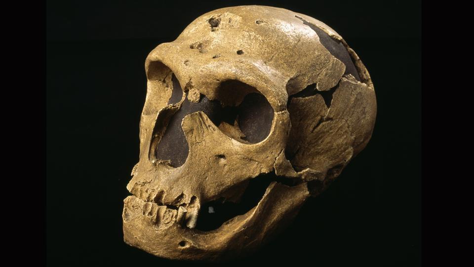 Pourquoi l'homme de Néandertal avait-il des yeux nettement plus gros que les nôtres ?