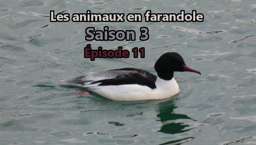 Les animaux en farandole: saison 3: épisode 11 - Vidéo dailymotion