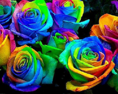 puzzle Rose multicolor