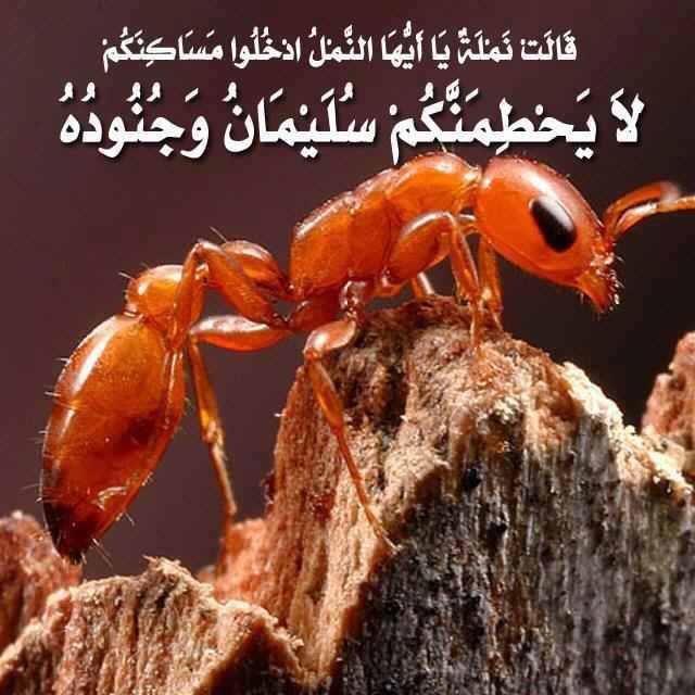 Islam - Coran | Sourate 3 | AL-IMRAN (LA FAMILLE D'IMRAN) | Arabe s...