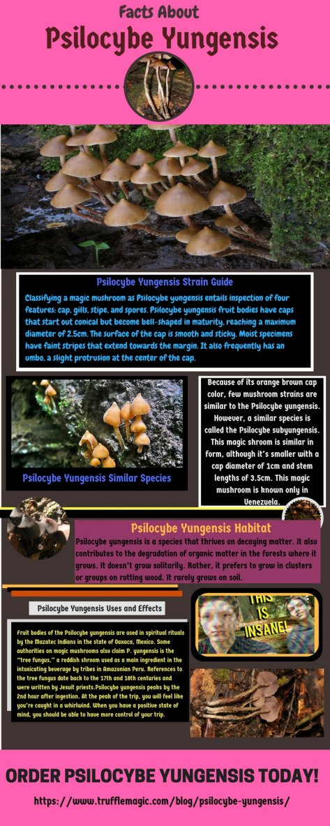 Facts About Psilocybe Yungensis
