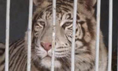 Pétition : Pour des cirques sans animaux à Valenciennes