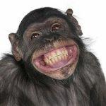 Les animaux qui rient : Journal MaNews