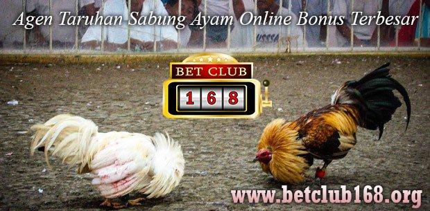 Agen Judi Adu Ayam Secara Online Terpopuler Bonus Besar