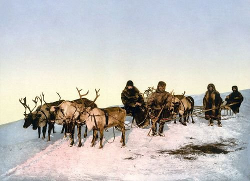10 Interesting Facts about Reindeer