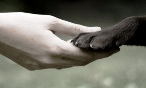 Pétition : Pour une vrai déclaration des droits des animaux