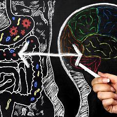 Microbiote et cerveau: troubles neurodéveloppementaux chez les garçons, maladies auto-immunes chez les femmes?