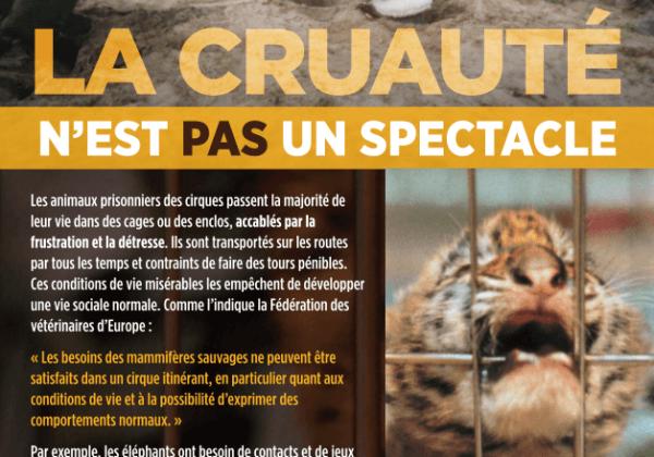 Cyril Hanouna s'engage à refuser les animaux sur son plateau grâce à Pamela Anderson | Actualités | PETA France