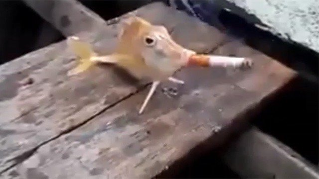 Watching A Fish Smoke A Cigarette Will Either Make You Rage Or Laugh