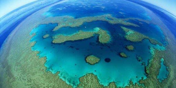 Ils veulent percer la Grande Barrière de corail!