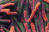 Le peuple microbien, le faux ennemi