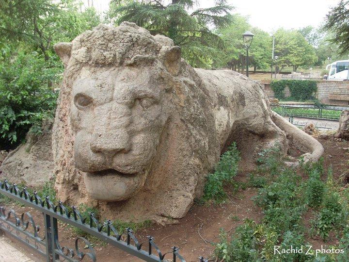 Le Lion d'Ifrane (Maroc)