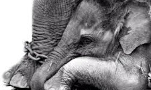 Pétition : Non aux cirques avec animaux à Cannes