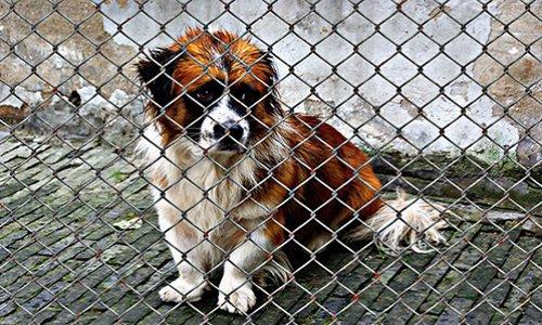 Pétition : Se mobiliser pour porter plainte contre toutes tortures d'animaux reconnus comme êtres sensibles