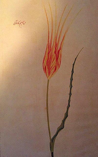Tulipes : d'où viennent-elles exactement