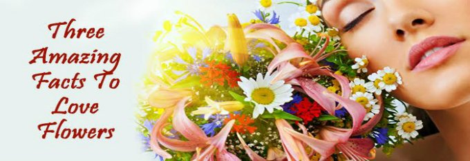 Three Amazing Facts to Love Flowers - Base Articles