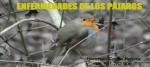 ENFERMEDADES DE LOS PAJAROS