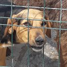 Donate to help animals in shelters : it's FREE !