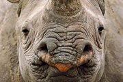 Contre le commerce de l'ivoire