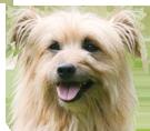 Société Centrale Canine - Arrêté du 3 avril 2014